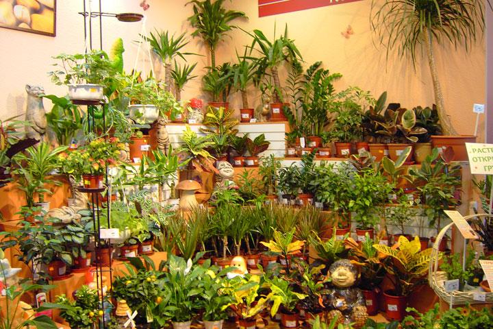 Украшаем дом комнатными растениями