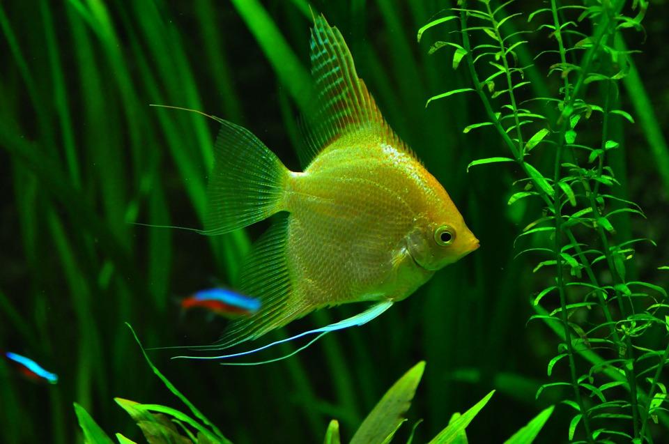 Каким должен быть правильный уход за аквариумом