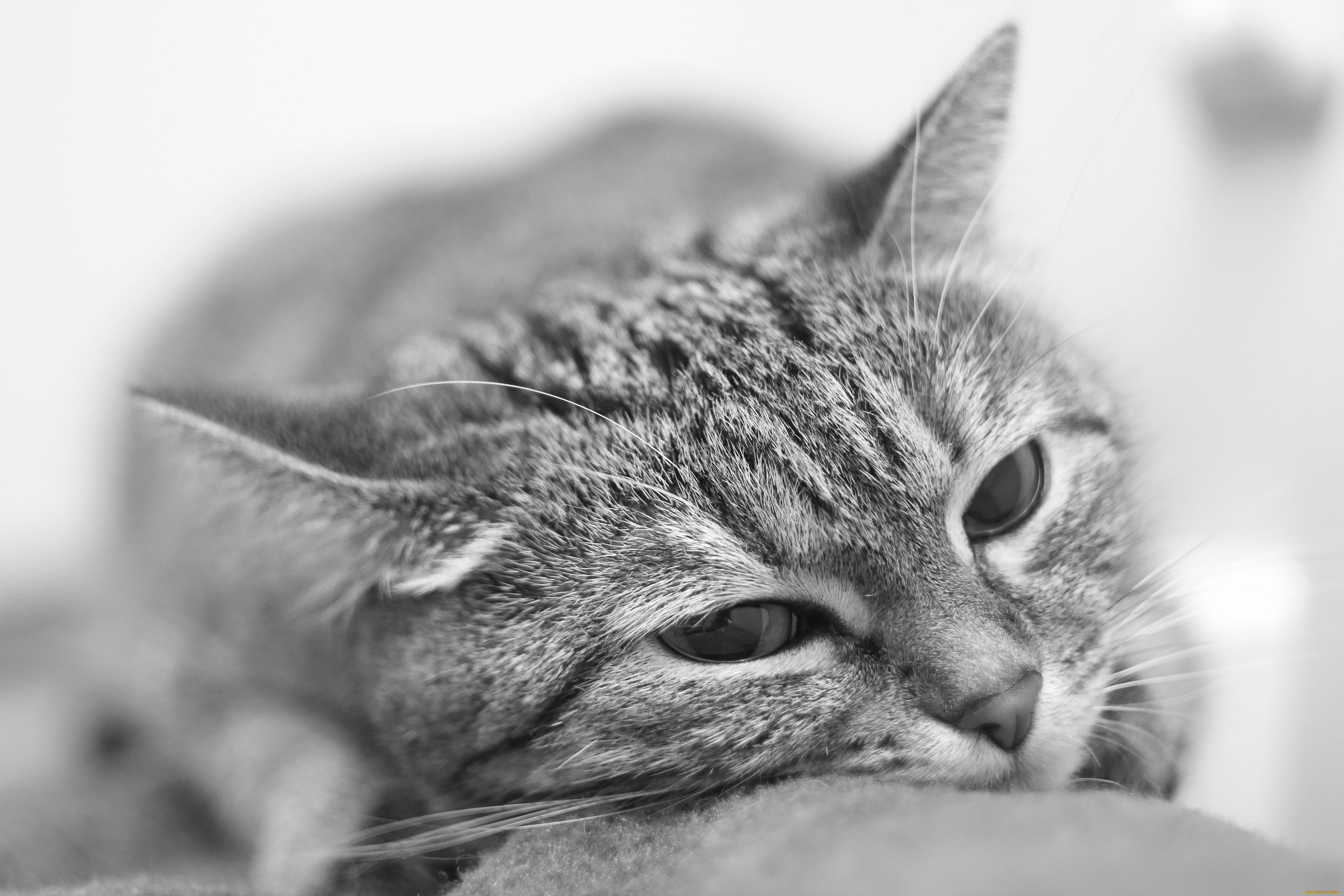 Все, что вы хотели знать о кошках