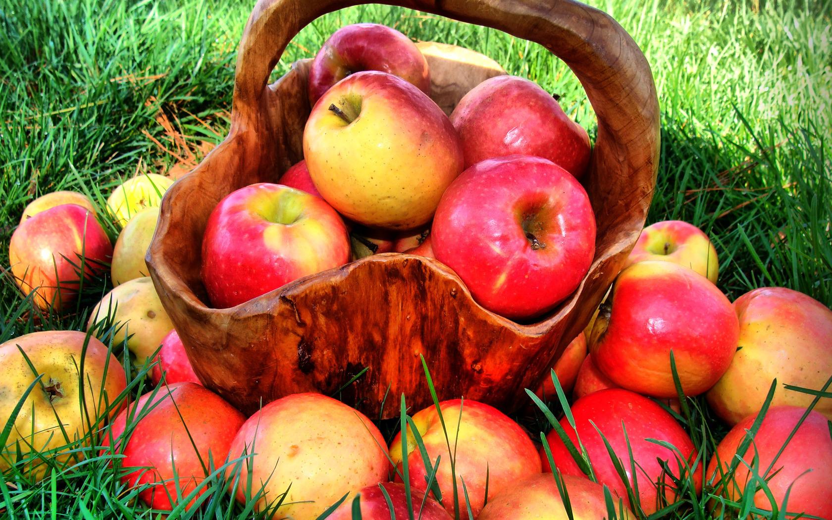 Яблоки и их польза для организма