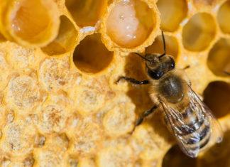 Купить маточное молочко в магазине Свий мёд