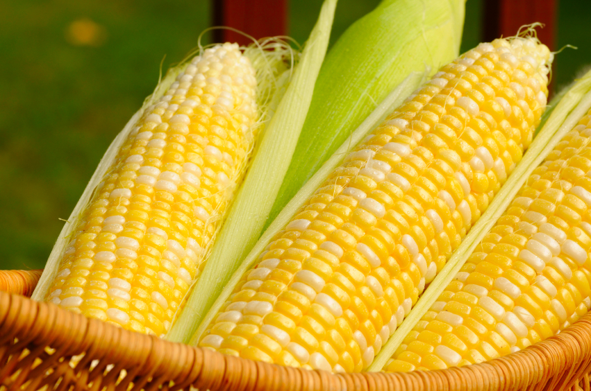 Кукуруза царица полей